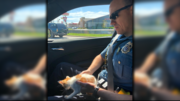 Name suggestions needed for kitten rescued by Arkansas State Police captain
