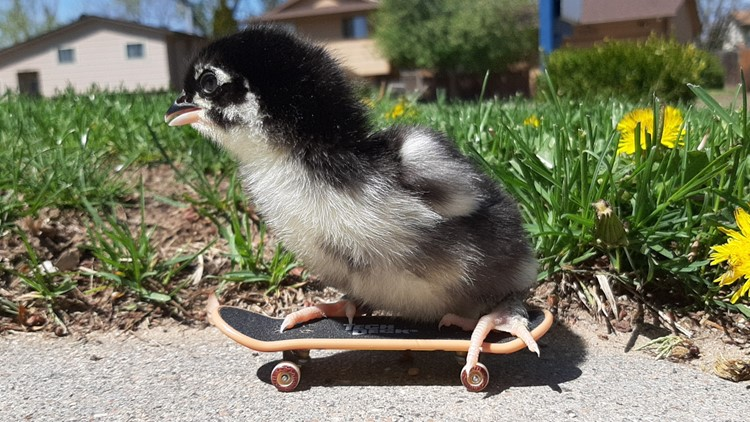 These 2 chicks have been skating since they were just 2 days old