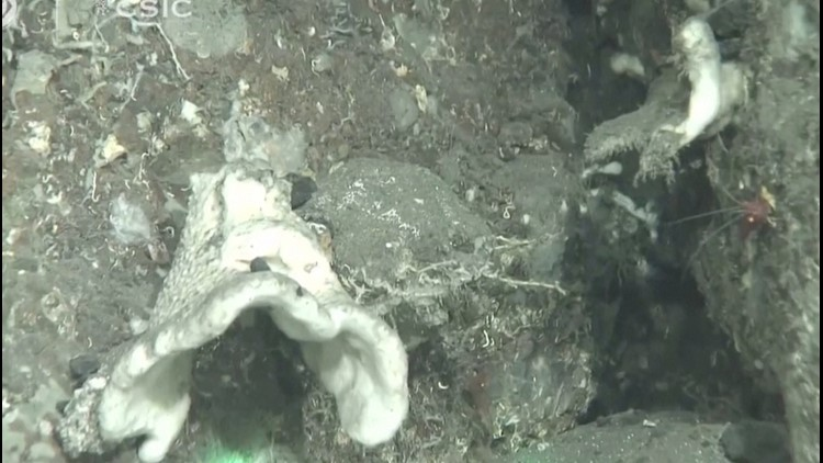 Footage of Ash Covered Marine Life Showcase How La Palma's Volcano Eruption Has Affected the Ecosystem