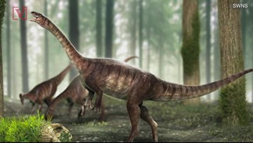 This Long-Necked Dinosaur Was Dug Up In Brazil!