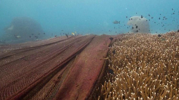 Huge Fishing Nets Have Been Discovered Choking Coral Reefs at Three Sites in Thailand