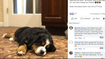 North Carolina funeral home uses puppy to help grieving families