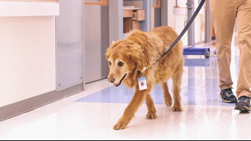 Emotional Support Dog 'Shep' Retires After Career of Helping UNC Cancer Patients