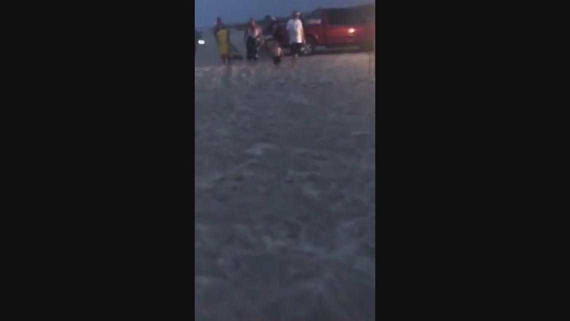 WATCH: Sea turtles hatch during July 4th celebration in Fernandina Beach