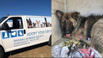 Nassau Humane Society to rescue German Shepherds found in 'extremely neglectful conditions'