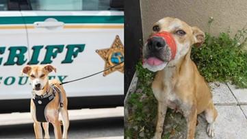Florida man sentenced to probation after taping dog's mouth shut