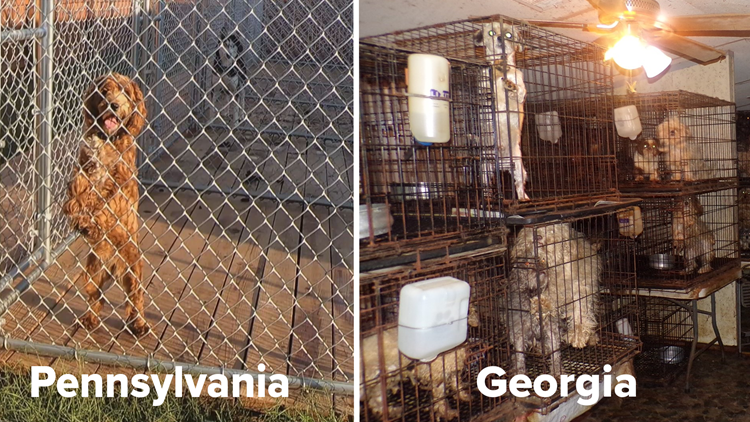 Caged in Cruelty PA v GA Kennels
