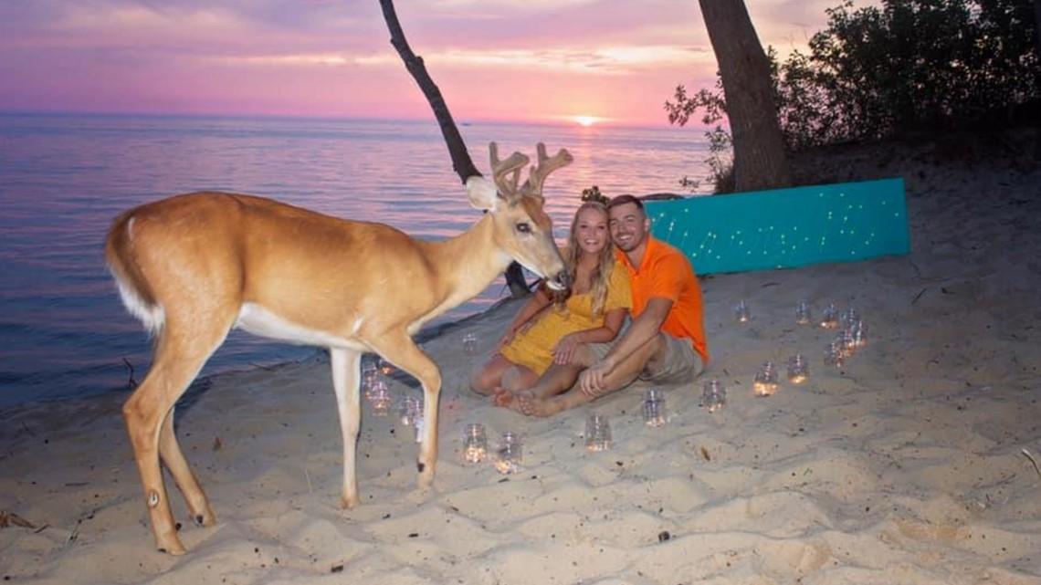 Deer photobombs engagement photos on the beach