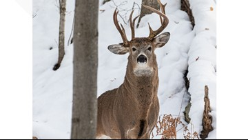 Rare 3-antler deer spotted in Michigan